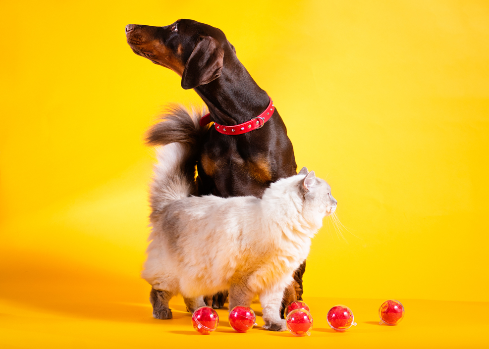 Aleksandra Rowicka Calendar 2020 Animal Welfare